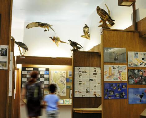 Birds flying in Nature Center