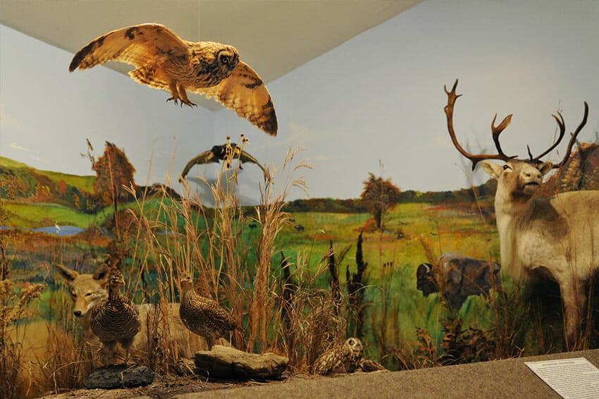 Owl and other animals displayed