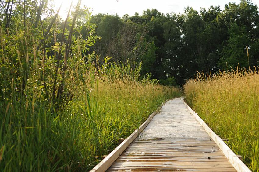 Path at Marsh Haven