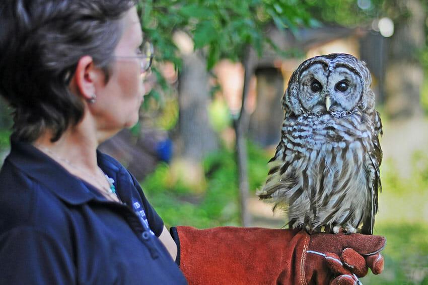 Marsh Haven employee with owl